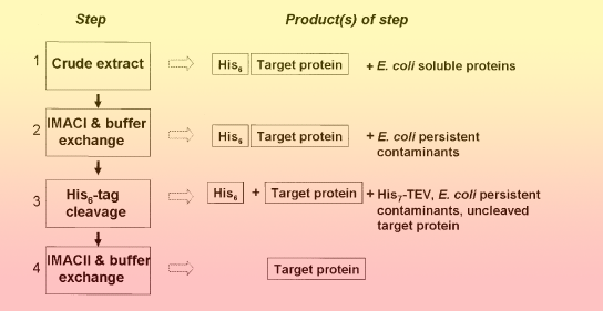 mcsg technologies    protein production